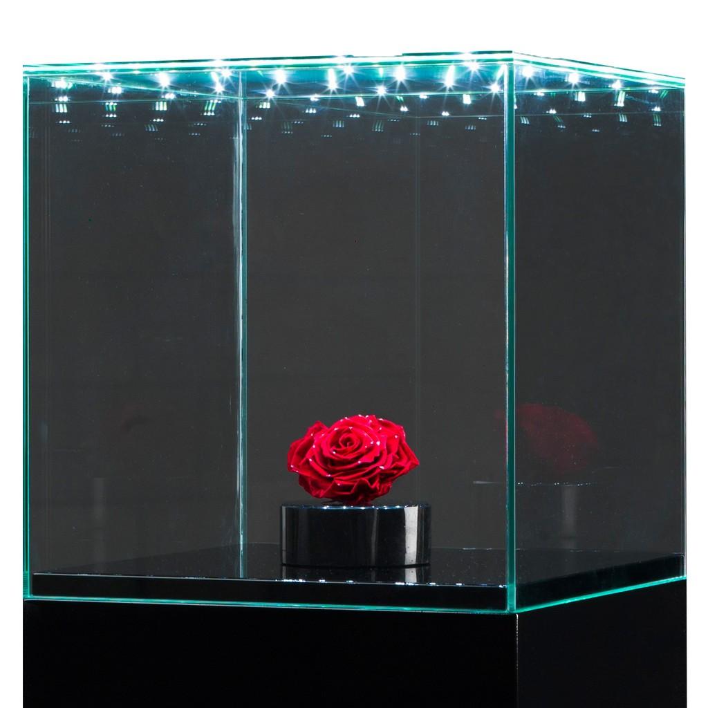 Glazen kap met geïntegreerde LED spots